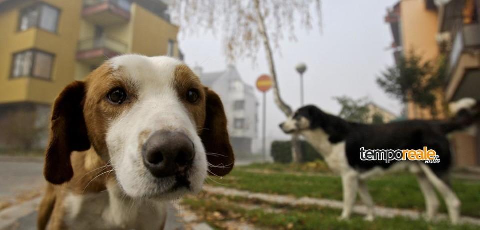 Cassino / Un avviso pubblico per la sterilizzazione dei cani