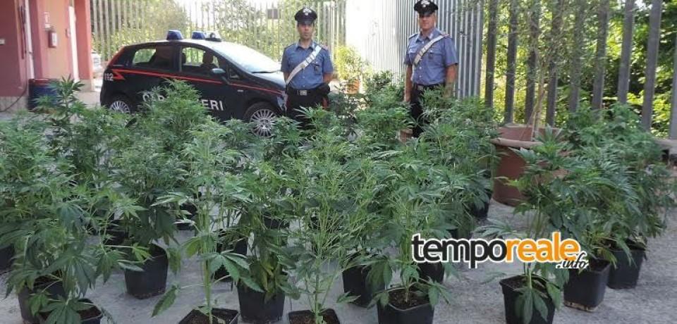 Roccadarce/ Trovate dai Carabinieri 34 piante di marijuana coltivate in cantina, arrestato