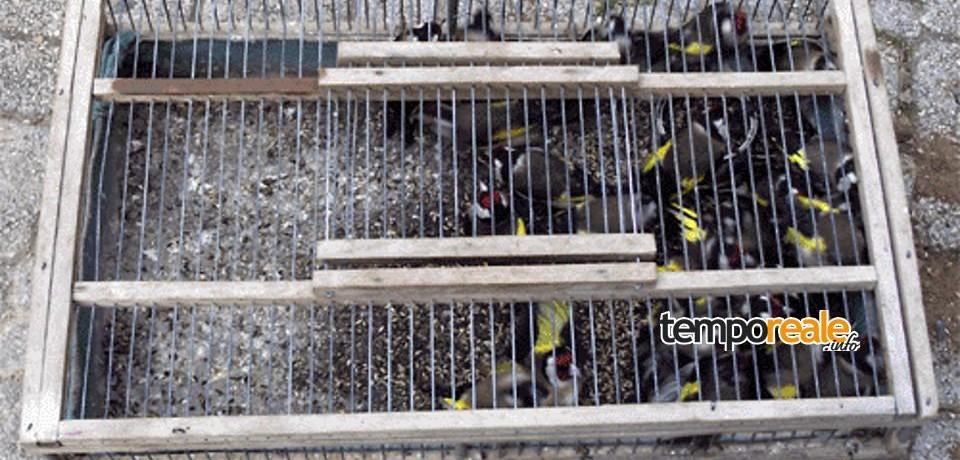 Itri / Catturano uccelli di specie protetta, denunciate due persone