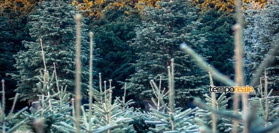 """Formia / """"Regalati un bosco"""", il 9 e 10 gennaio la raccolta di abeti di Natale"""