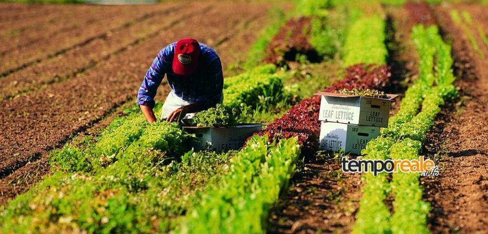 Sperlonga / Comparto agricolo, il convegno di Fratelli d'Italia