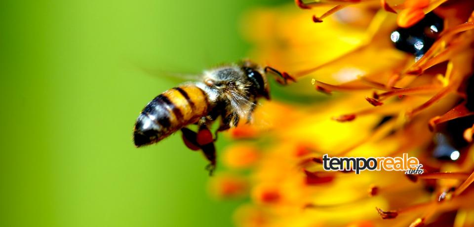 """Formia / """"L'ape nella storia dell'arte e nel gusto moderno"""", mercoledì 9 marzo l'incontro"""