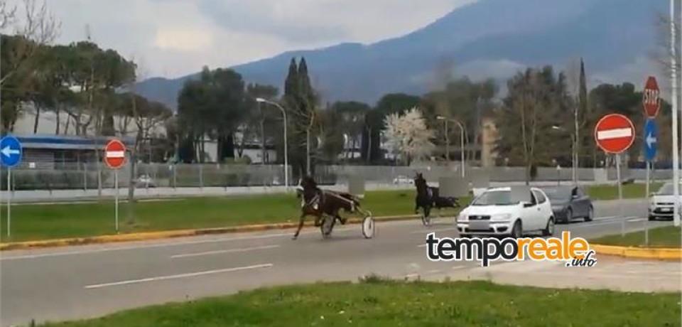 Piedimonte San Germano / Corse clandestine di cavalli sullo stradone ex Fiat, 4 persone denunciate