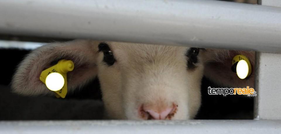 Latina / Violazioni trasporto animali, il Corpo Forestale emette sanzioni e il fermo di un veicolo