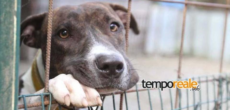 Aquino / Successo contro il randagismo con i volontari ACL Onlus, 52 cani adottati e soldi risparmiati