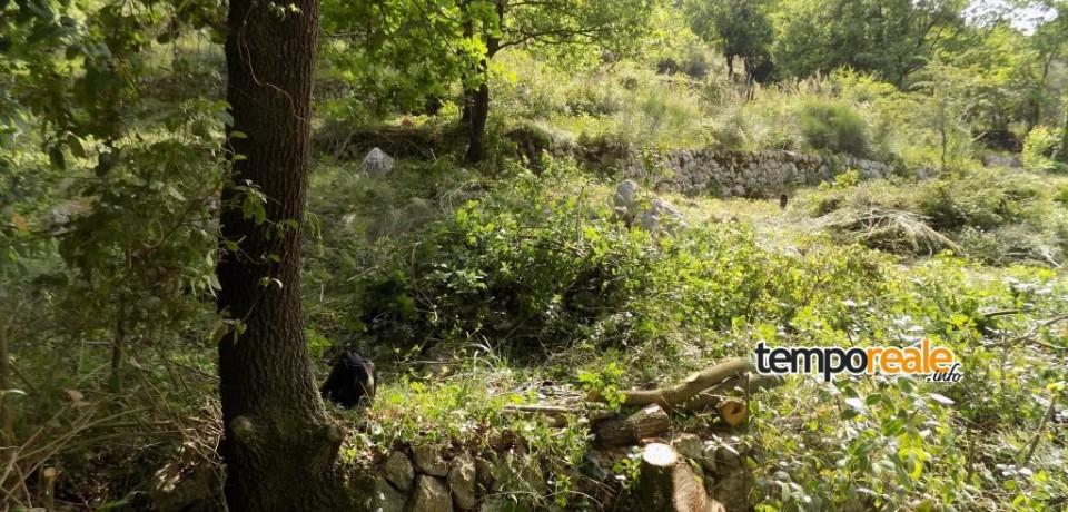 Itri / Fuochi accesi e tagli abusivi di specie protette, la Guardia Forestale in azione contro i reati ambientali