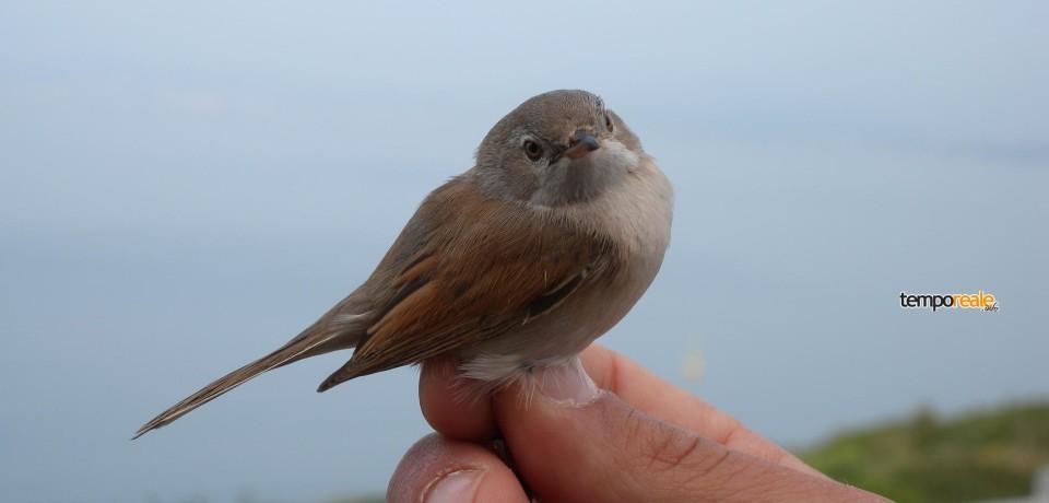 Formia / Riapre la stazione di Inanellamento degli uccelli migratori nell'area protetta di Gianola