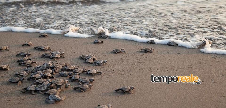 Minturno / Tartarughe marine, iniziative di sensibilizzazione per aiutarle a nidificare sul litorale