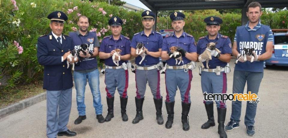Cassino / Polizia di Stato salva cuccioli di cane