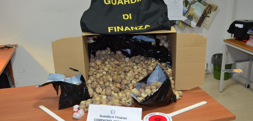 Terracina / Sequestrati 2,5 kg di bulbi di papavero da oppio, arrestato un cittadino indiano