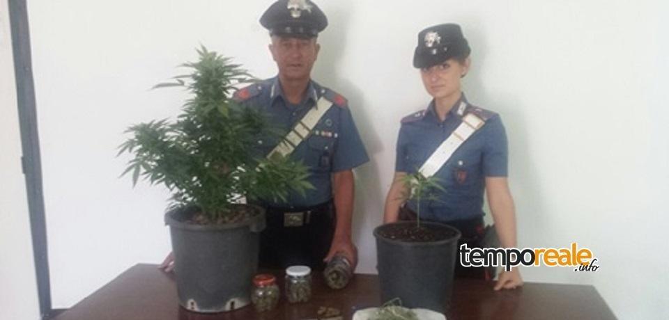 Terracina / Detenzione e coltivazione di stupefacenti: arrestato un giovane del luogo