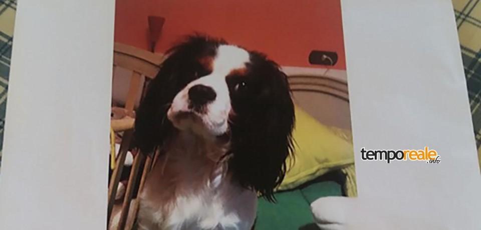 Formia / Gara di solidarietà per Lucky, il cagnolino scomparso a Santo Janni