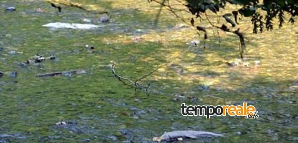 Formia / Rio Santa Croce, l'Asl: morìa di pesci legata alle alte temperature dell'acqua