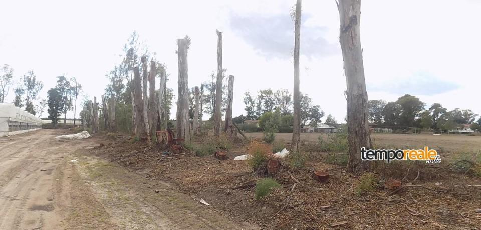 Terracina / La Forestale sequestra 500 quintali di legna