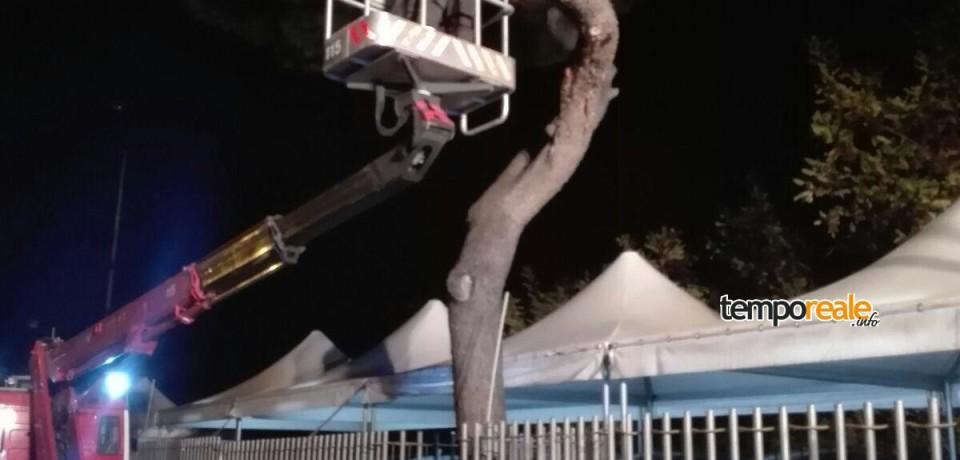 Formia / Pericolosissimo ramo invade via De Gasperi