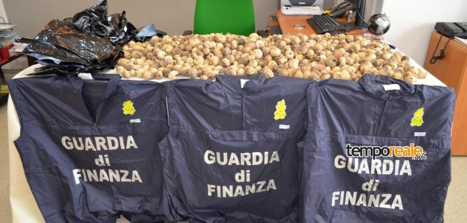 Latina / Arrestato corriere della droga con oltre 2,5 chili di bulbi di papavero