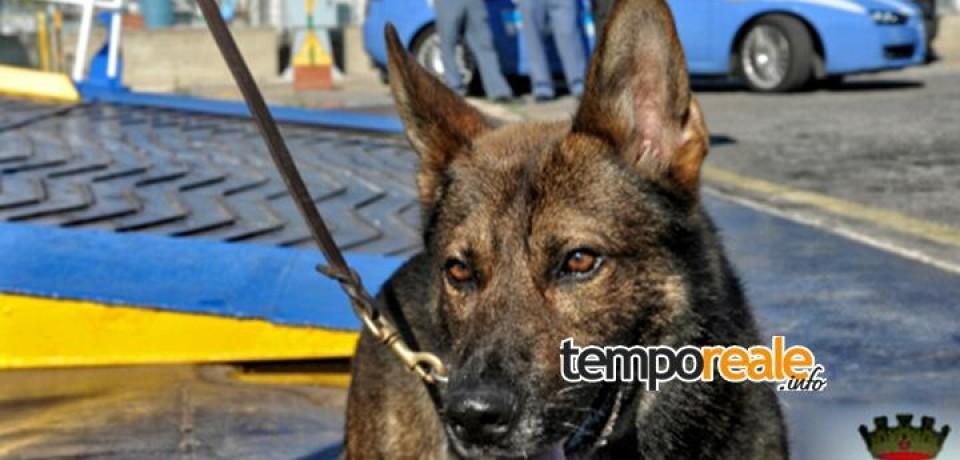 Formia / Contrasto alle sostanze stupefacenti con i cani poliziotto antidroga