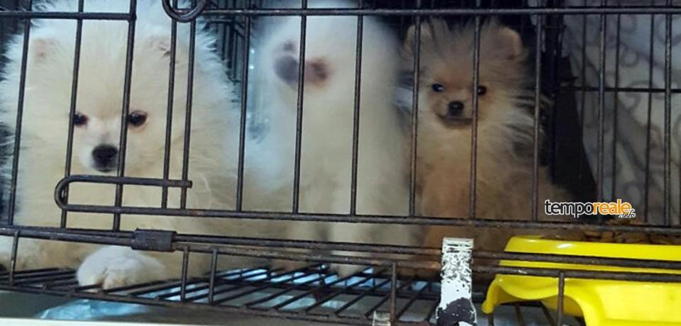 Frosinone / Traffico illecito di animali: tre persone denunciate sulla A1