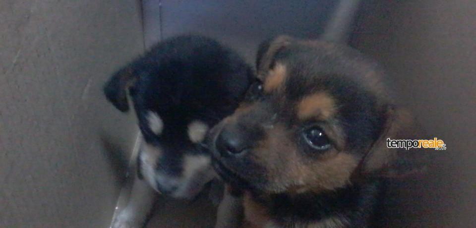 Gaeta / Due cuccioli salvati in serata dall'investimento, appello per l'adozione