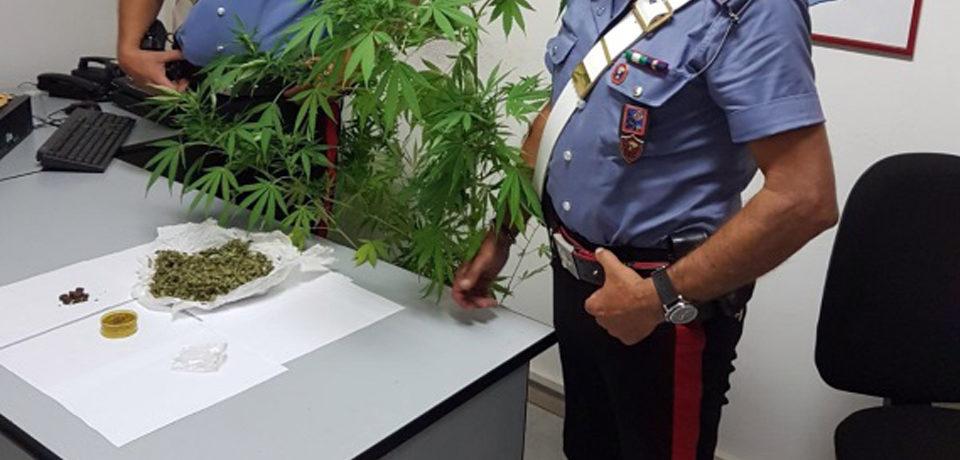 Minturno / Hashish nascosto nel wc e coltivazione di marijuana in casa, 33enne arrestato