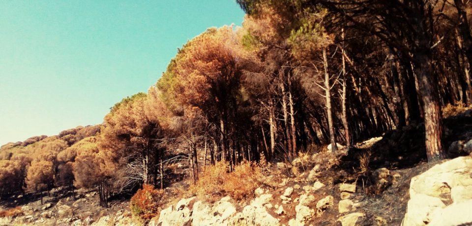Spigno Saturnia / Incendi, è emergenza caduta alberi. Pronto un piano di intervento
