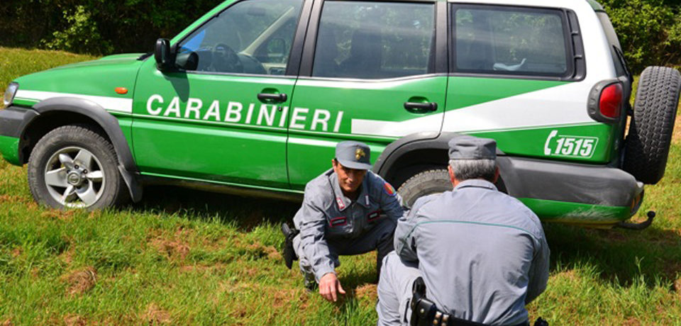 Spigno Saturnia / Sparisce il materiale sequestrato in un terreno, donna denunciata per la seconda volta