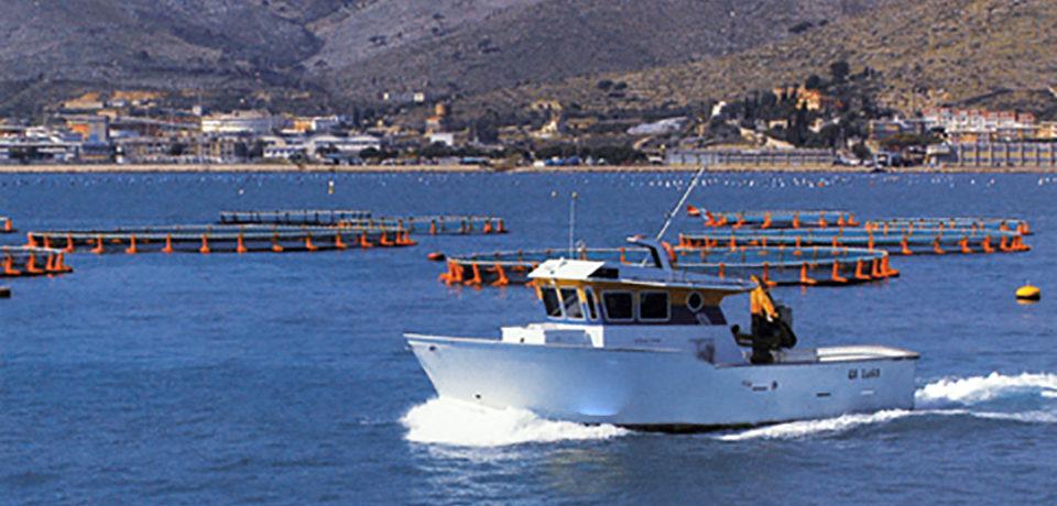 Formia / Delocalizzazione degli impianti di itticoltura, l'intervento di Antonio Di Rocco