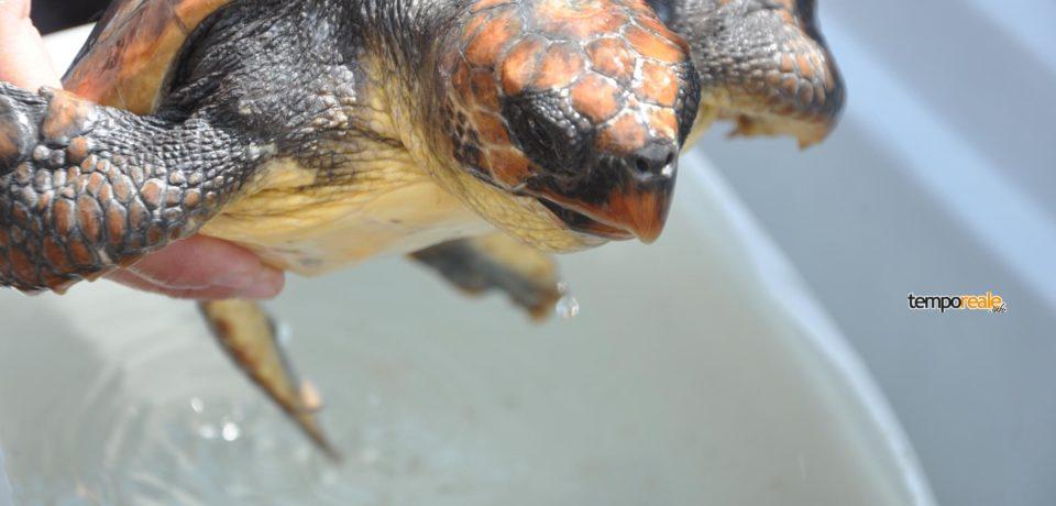 Ponza / Salvata tartaruga nei pressi dell'isolotto di Zannone