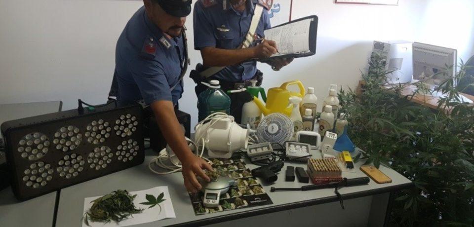 Minturno / Trovati con una piantagione di marijuana in casa: scarcerati