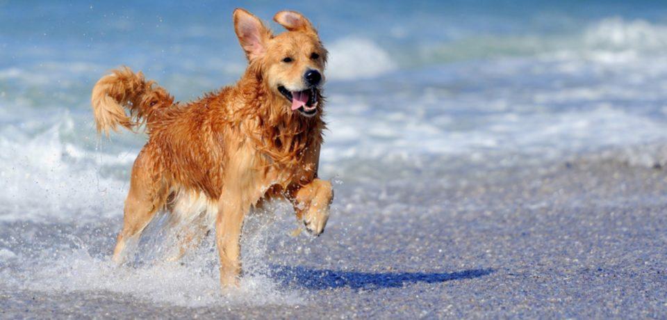 Minturno / Divieto di accesso in spiaggia ai cani, i 5 stelle ricorrono al Tar