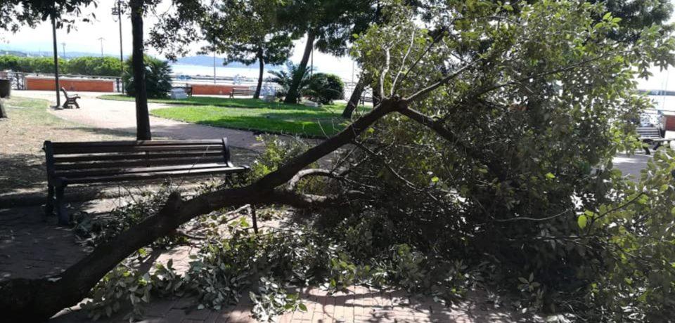 Formia / Paura in villa comunale: cade un grosso ramo d'albero (video)