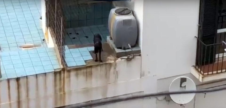 Video shock Ponza: cane costretto a vivere in una situazione agghiacciante