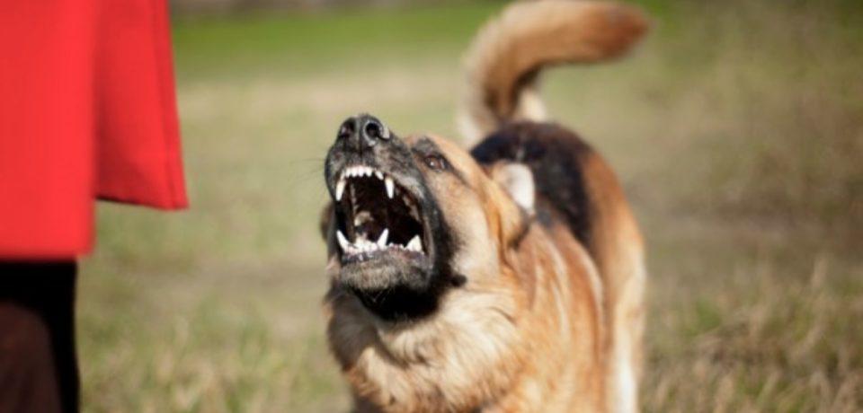 Fondi / Medico ucciso da un cane, l'autopsia conferma le ferite provocate dai morsi