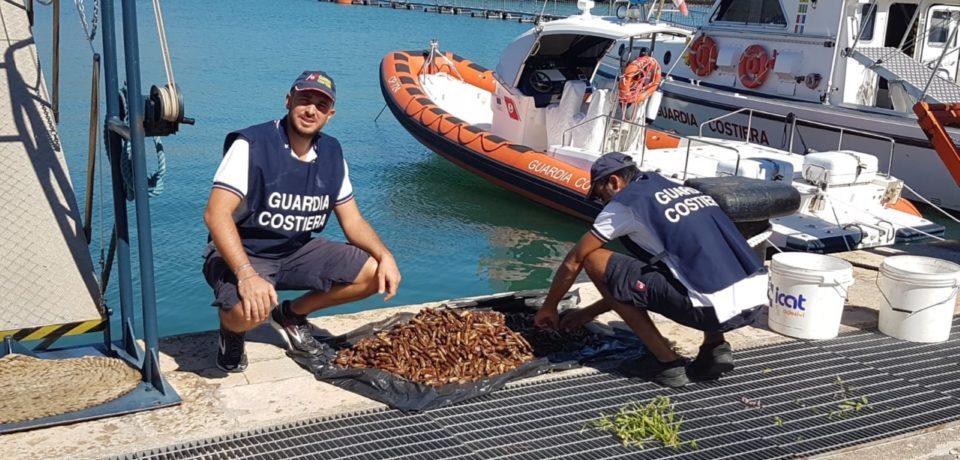 Minturno / Guardia Costiera blocca pescatore di frodo di datteri di mare