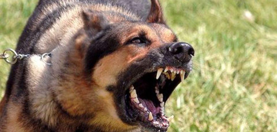 Fondi / Medico azzannato da un cane, mercoledì l'autopsia
