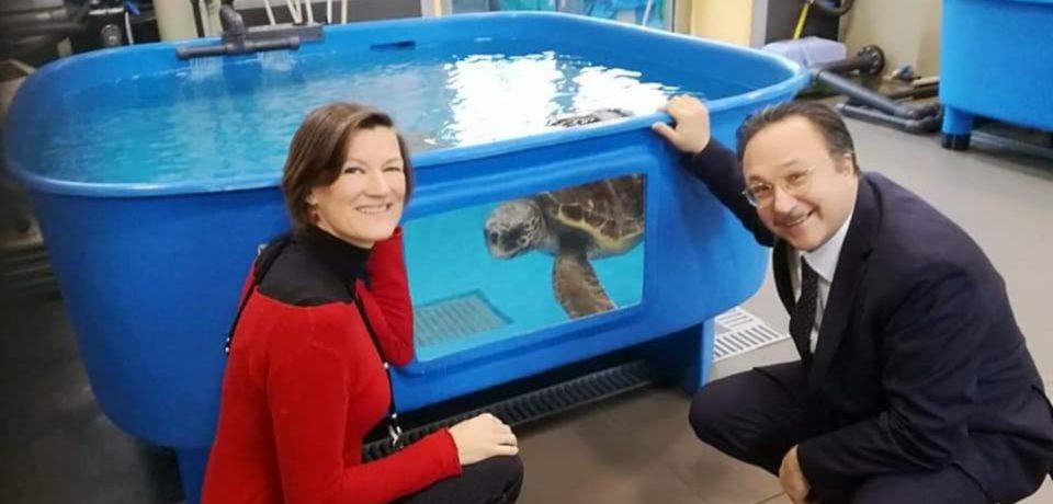 Ventotene si candida a ospitare sede di primo soccorso per le tartarughe marine