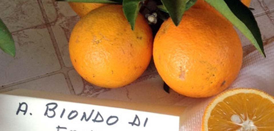 Birra all'arancia bionda di Fondi: la presentazione al Castello Caetani
