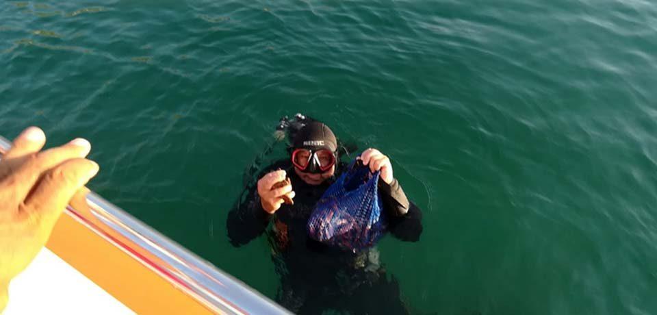 Formia / Pescatori di frodo speronano la Guardia costiera: sequestrati 50 chili di datteri di mare
