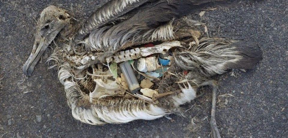 """Il Parco Riviera di Ulisse aderisce alla campagna """"Plastic Free Challenge"""""""