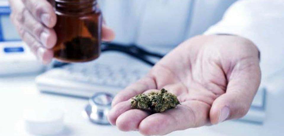 Cannabis Legale: le novità di Legaldelivery