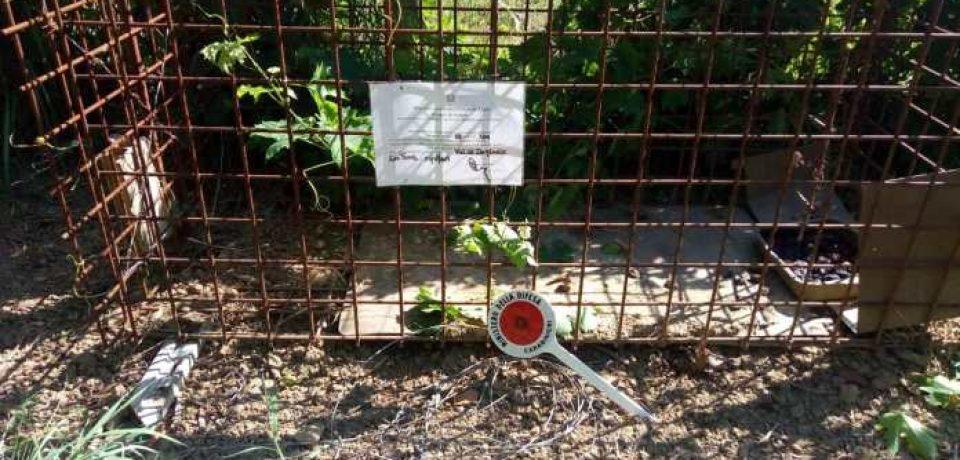 Castelforte / Blitz antibracconaggio, sequestrati una gabbia e lacci con cappio a strozzo