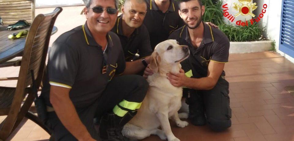 Gaeta / Vigili del Fuoco salvano un cane bloccato sugli scogli