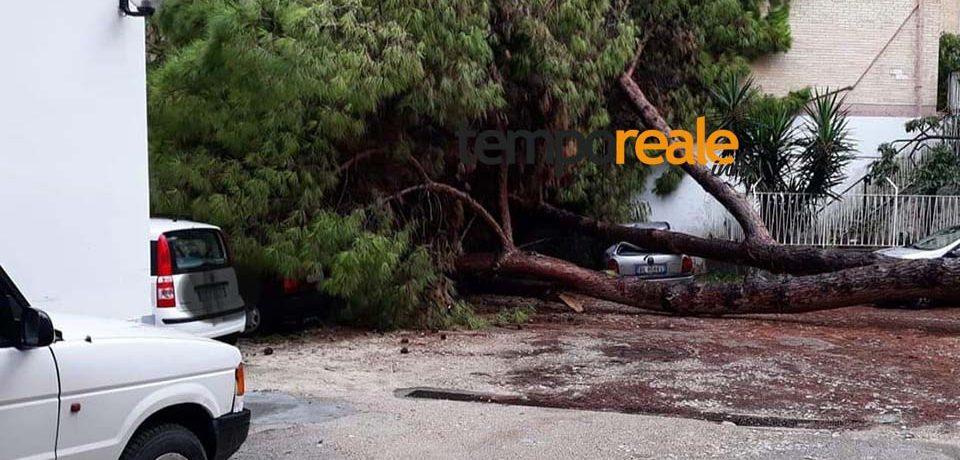 Gaeta / Maltempo, due alberi abbattuti dal vento e caduti su due auto