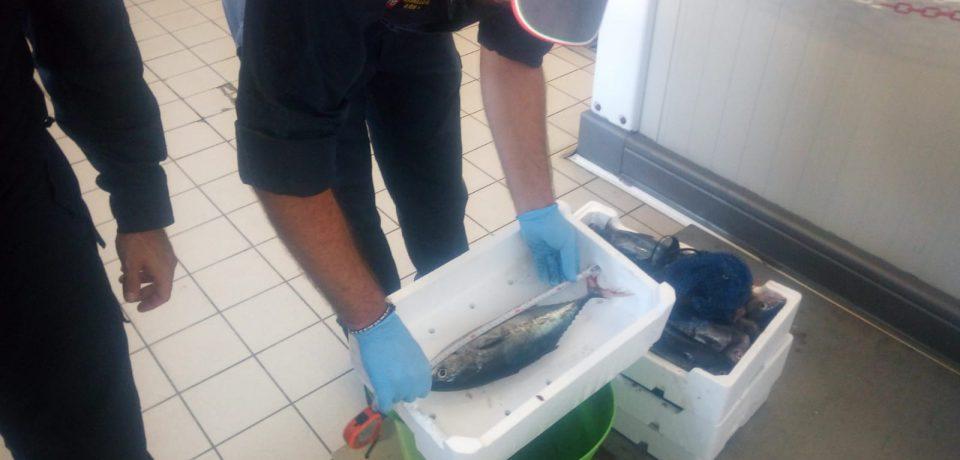 Gaeta / Tonno rosso, la Guardia Costiera sequestra venti esemplari pescati