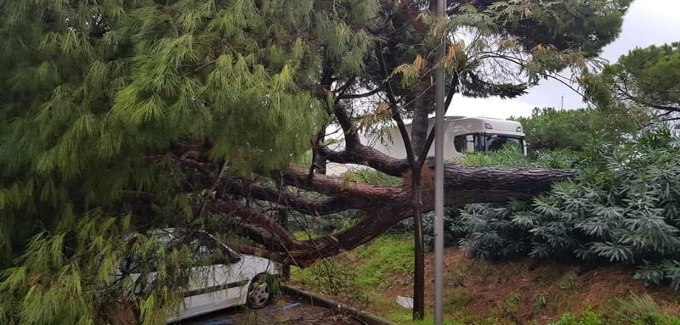 Maltempo a Formia: alberi caduti, allagamenti e scuole chiuse [VIDEO]