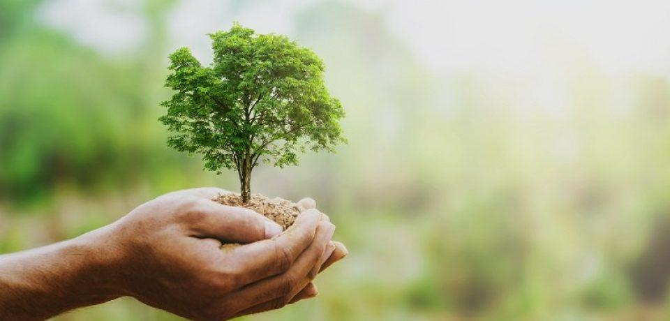 Formia / Dal 21 novembre, tre giornate per celebrare la festa dell'albero