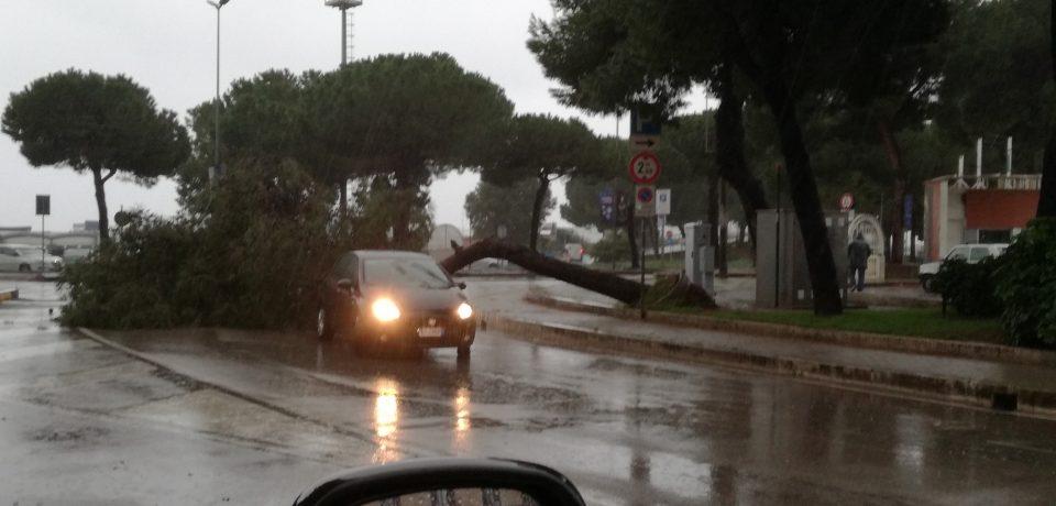 Maltempo nel sud pontino tra allagamenti e alberi caduti