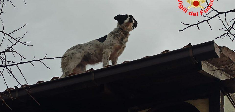 Formia / I vigili del fuoco salvano il cane Luna salito sul tetto di un'abitazione